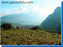 Vineyard near Lake Garda